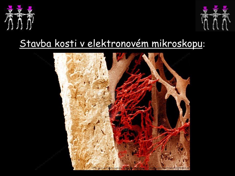 Stavba kosti v elektronovém mikroskopu : http://www.profimedia.rs/photo/compact-bone-and-spongy-or-cancellous-bone/profimedia-0039964113.jpg