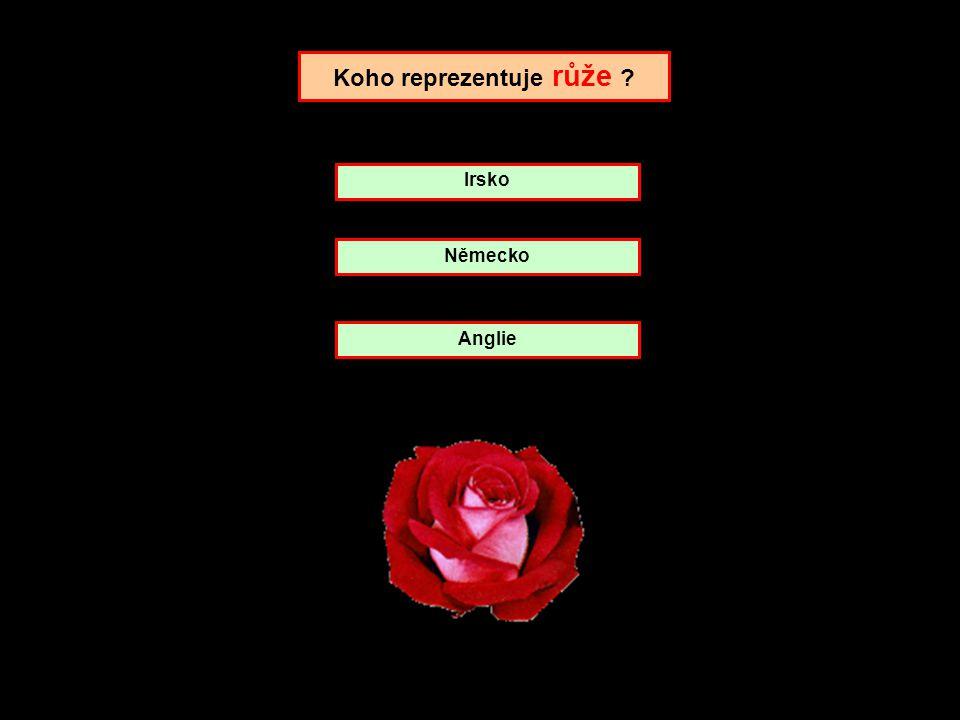 Koho reprezentuje růže ? Německo Irsko Anglie