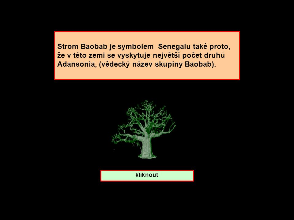Strom Baobab. které zemi patří ? Senegal Mali Madagaskar