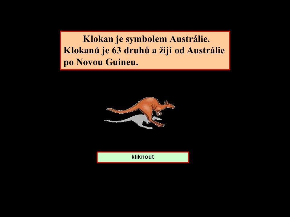 Klokan je symbolem Austrálie. Klokanů je 63 druhů a žijí od Austrálie po Novou Guineu. kliknout