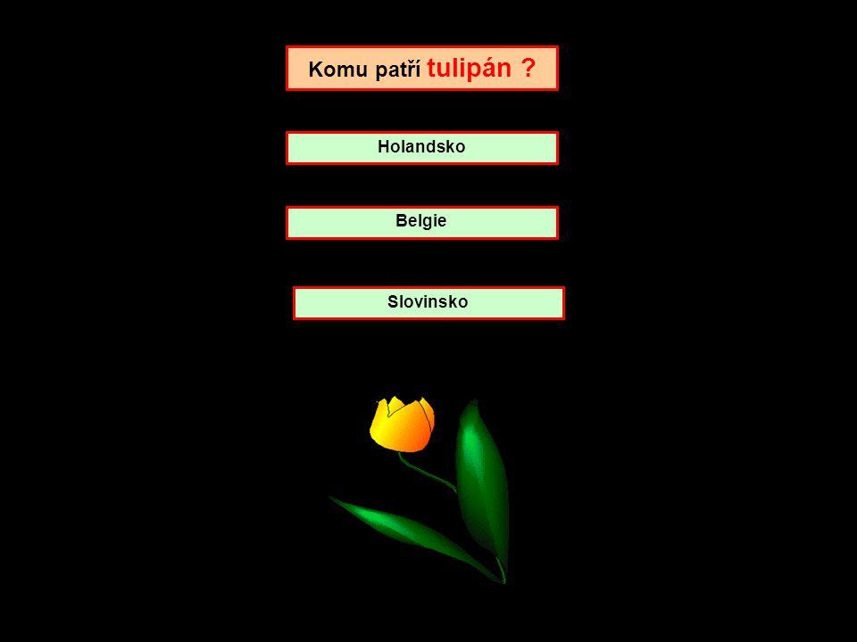 Komu patří Chrysantéma ? Italie Japonsko Tibet