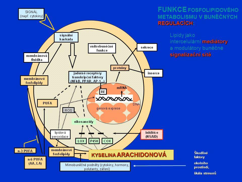 FUNKCE FOSFOLIPIDOVÉHO METABOLISMU V BUNĚČNÝCH REGULACÍCH REGULACÍCH: KYSELINA ARACHIDONOVÁ Lipidy jako mediátory intercelulární mediátory a modulátory buněčné signalizační sítě Škodlivé faktory okolního prostředí, škála stresorů