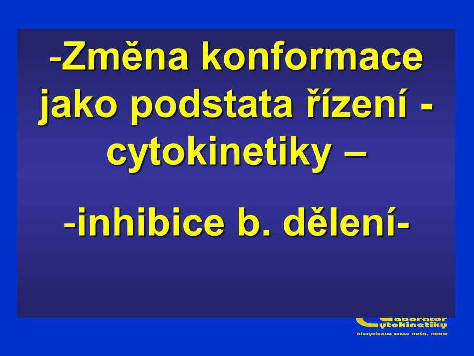 -Změna konformace jako podstata řízení - cytokinetiky – -inhibice b. dělení-