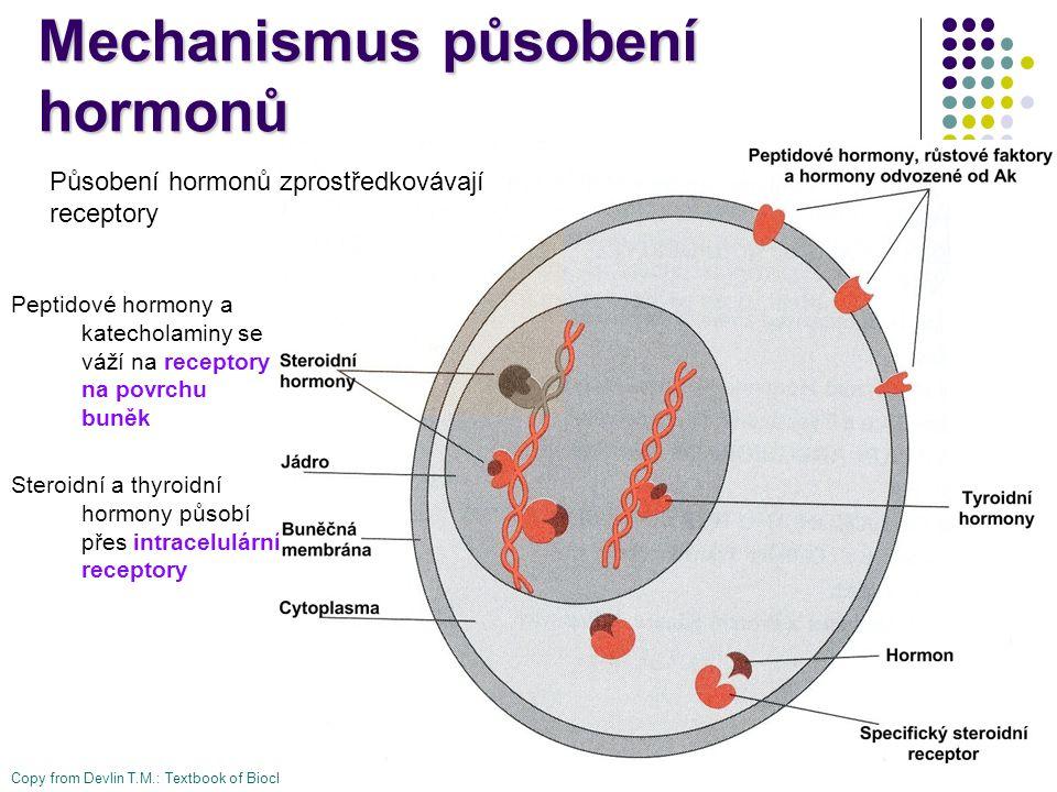 Mechanismus působení hormonů Peptidové hormony a katecholaminy se váží na receptory na povrchu buněk Steroidní a thyroidní hormony působí přes intrace