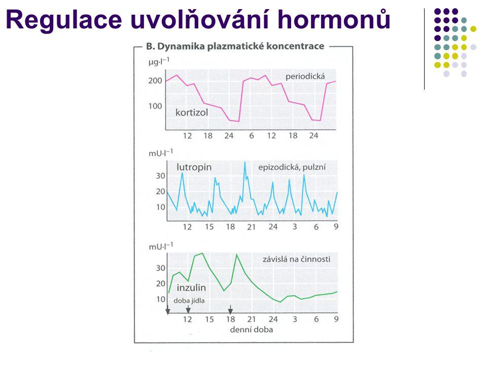 """CNS Limbický systém Hypothalamus Adenohypofýza Cílová """"žláza Vnější či vnitřní signál Elektricko-chemický signál Uvolňující hormony - liberiny (ng) Adenohypofyzární hormony (μg) Cílové hormony (mg) Systémový efekt Gonády, štítná žláza, kůra nadledvin Hormonální kaskáda Amplifikace signálu Inhibiční hormony – statiny (ng)"""