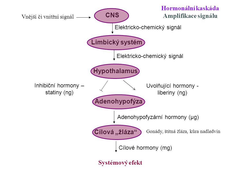 """CNS Limbický systém Hypothalamus Adenohypofýza Cílová """"žláza Uvolňující hormony Adenohypofyzární hormony Cílové hormony Systémový efekt Krátká zpětná vazba Dlouhá zpětná vazba Hormonální kaskáda Negativní zpětná vazba"""