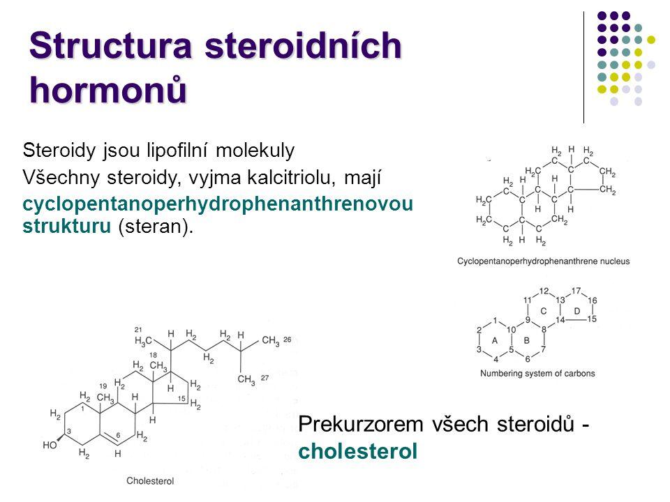 Transport steroidních hormonů v krvi Steroidní hormony jsou lipofilní molekuly  v krvi jsou vázané na transportní proteiny hormon vázaný na protein endokrinní buňky volný hormon receptor degradace biologický účinek albumin globulin vázající kortikosteroidy (CBG), neboli transkortin globulin vázající pohlavní hormony (SHBG) androgeny vázající protein (ABP) Pouze volná frakce je biologicky aktivní, obvykle činí méně jak 10%