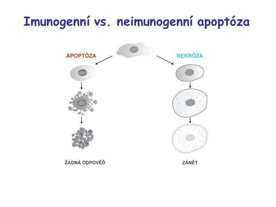 Imunogenní vs. neimunogenní apoptóza