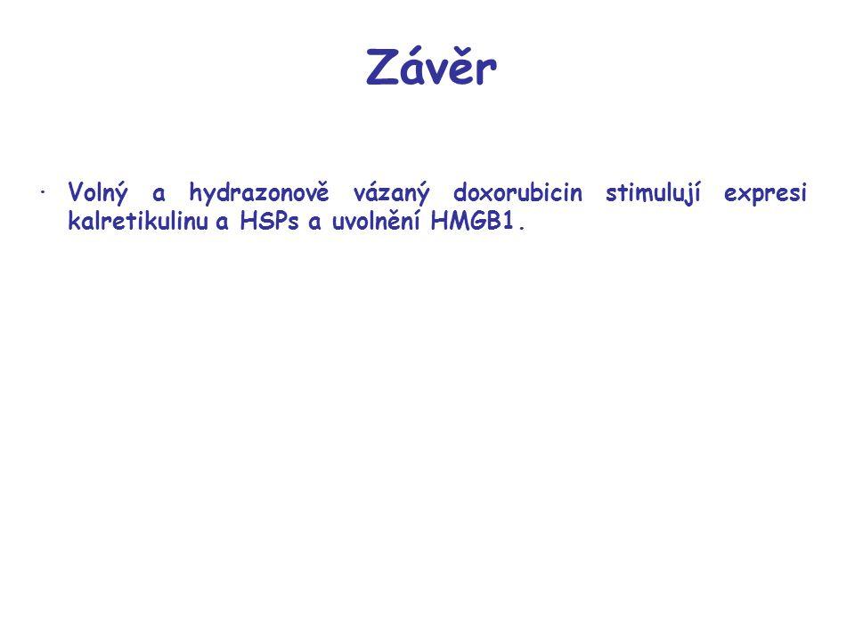 ·Volný a hydrazonově vázaný doxorubicin stimulují expresi kalretikulinu a HSPs a uvolnění HMGB1.
