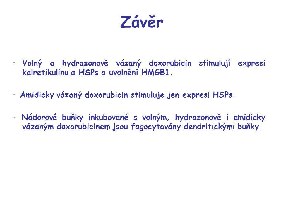 Závěr ·Volný a hydrazonově vázaný doxorubicin stimulují expresi kalretikulinu a HSPs a uvolnění HMGB1. · Amidicky vázaný doxorubicin stimuluje jen exp