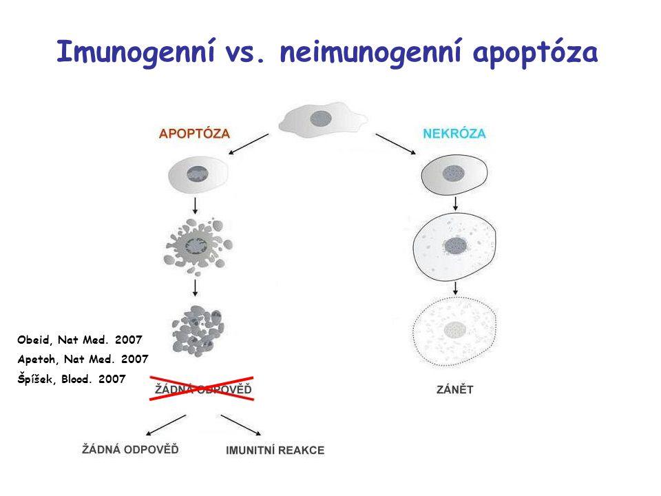 HMGB1, supernatant, 24h HMGB1, supernatant,72h β -aktin, supernatant, 72h HMGB 1, lyzát, 72h Kontrola Dox Dox-HPMA HYD Dox-HPMA AM Dox-HPMA-HuIg AM Imunogenní apoptóza – HMGB1 Uvolňování High-mobility-group box 1 (HMGB1) proteinu z EL4 buněk.