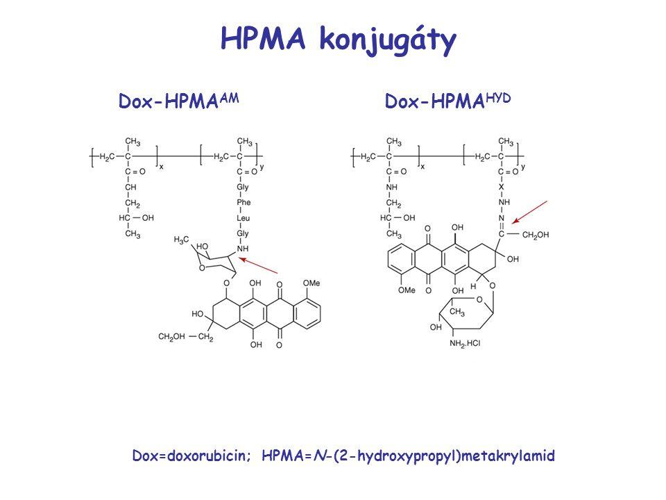 Dox-HPMA AM Dox-HPMA HYD Dox=doxorubicin; HPMA=N-(2-hydroxypropyl)metakrylamid HPMA konjugáty
