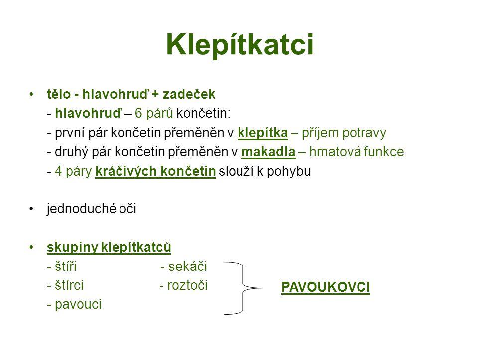 Klepítkatci tělo - hlavohruď + zadeček - hlavohruď – 6 párů končetin: - první pár končetin přeměněn v klepítka – příjem potravy - druhý pár končetin přeměněn v makadla – hmatová funkce - 4 páry kráčivých končetin slouží k pohybu jednoduché oči skupiny klepítkatců - štíři - sekáči - štírci - roztoči - pavouci PAVOUKOVCI