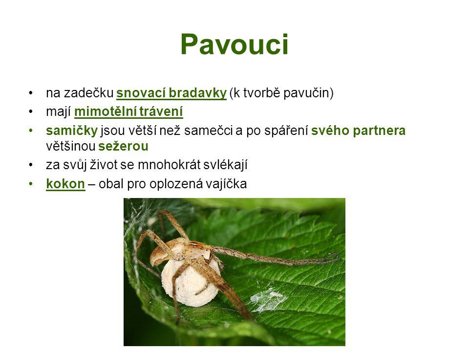 Pavouci na zadečku snovací bradavky (k tvorbě pavučin) mají mimotělní trávení samičky jsou větší než samečci a po spáření svého partnera většinou sežerou za svůj život se mnohokrát svlékají kokon – obal pro oplozená vajíčka