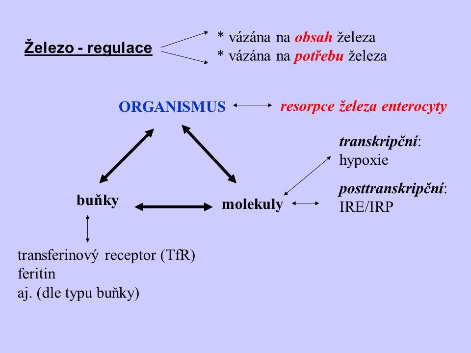 Železo - regulace ORGANISMUS buňky molekuly resorpce železa enterocyty posttranskripční: IRE/IRP transferinový receptor (TfR) feritin aj. (dle typu bu