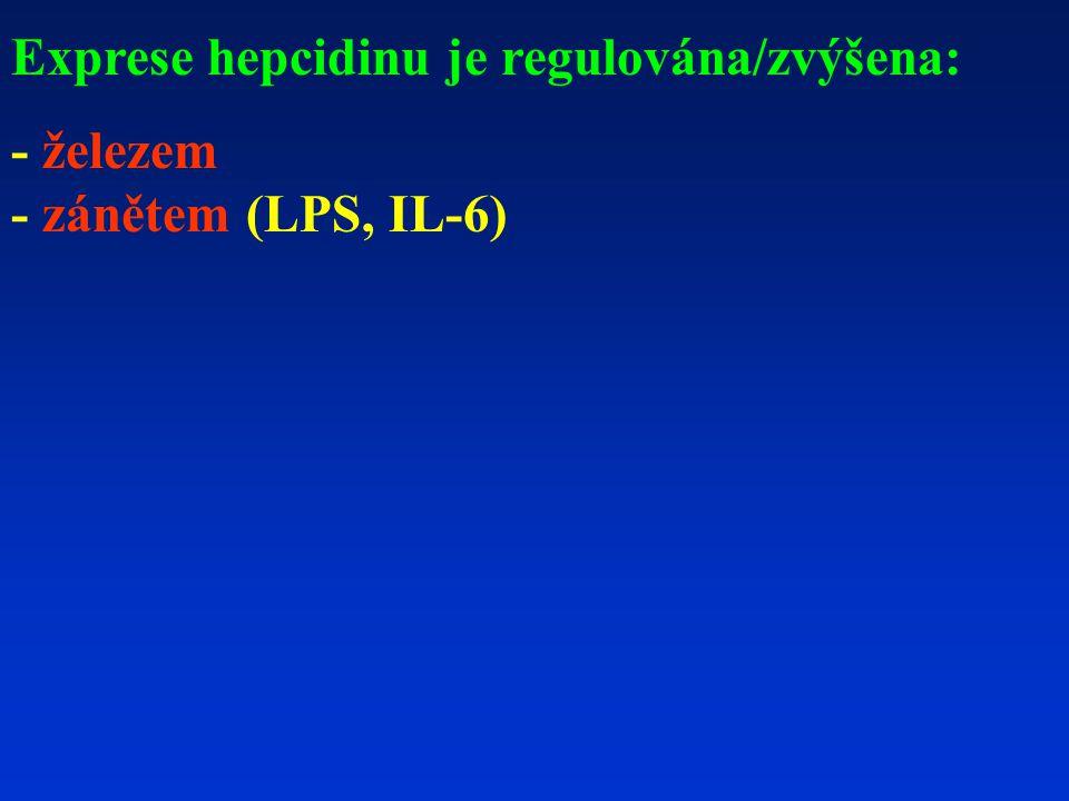 Exprese hepcidinu je regulována/zvýšena: - železem - zánětem (LPS, IL-6)
