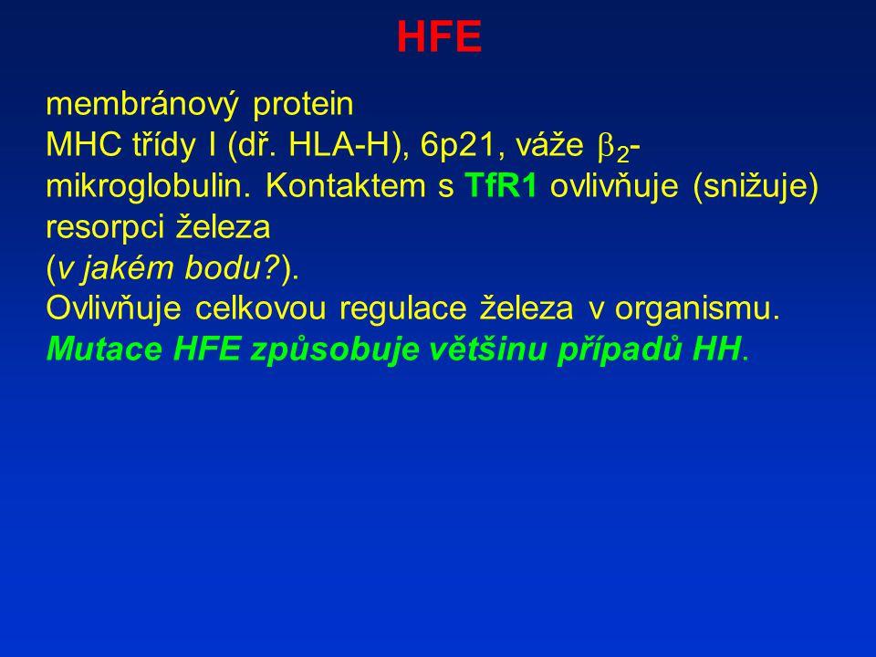 HFE membránový protein MHC třídy I (dř. HLA-H), 6p21, váže  2 - mikroglobulin. Kontaktem s TfR1 ovlivňuje (snižuje) resorpci železa (v jakém bodu?).