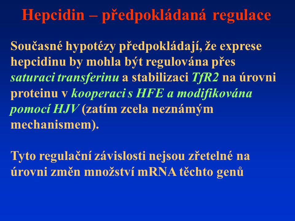 Hepcidin – předpokládaná regulace Současné hypotézy předpokládají, že exprese hepcidinu by mohla být regulována přes saturaci transferinu a stabilizaci TfR2 na úrovni proteinu v kooperaci s HFE a modifikována pomocí HJV (zatím zcela neznámým mechanismem).