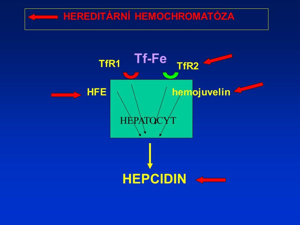 HEPCIDIN HEPATOCYT TfR2 hemojuvelinHFE TfR1 Tf-Fe HEREDITÁRNÍ HEMOCHROMATÓZA