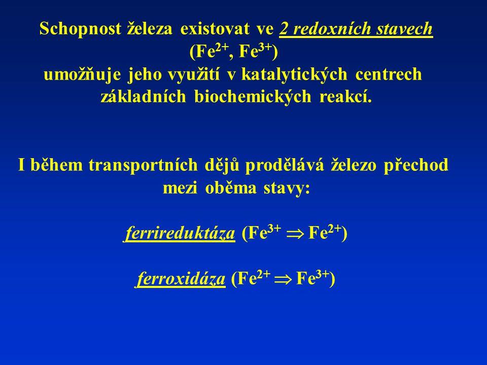 Schopnost železa existovat ve 2 redoxních stavech (Fe 2+, Fe 3+ ) umožňuje jeho využití v katalytických centrech základních biochemických reakcí.
