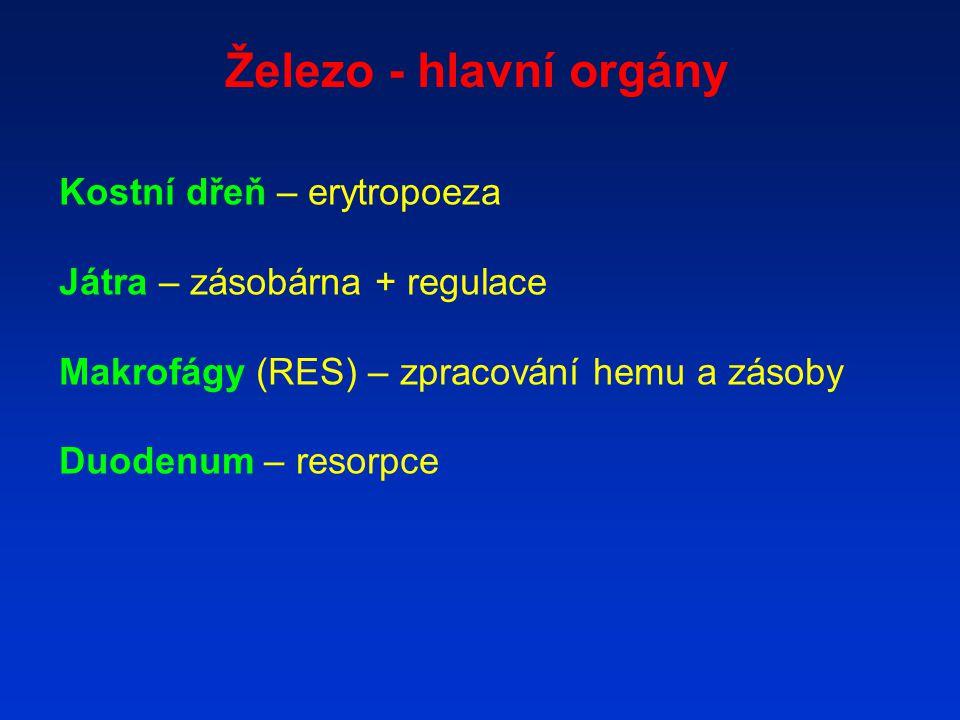Železo - hlavní orgány Kostní dřeň – erytropoeza Játra – zásobárna + regulace Makrofágy (RES) – zpracování hemu a zásoby Duodenum – resorpce