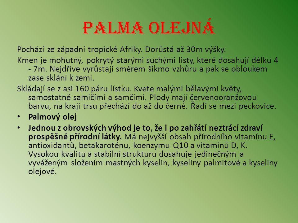 Palma olejná Pochází ze západní tropické Afriky. Dorůstá až 30m výšky. Kmen je mohutný, pokrytý starými suchými listy, které dosahují délku 4 - 7m. Ne