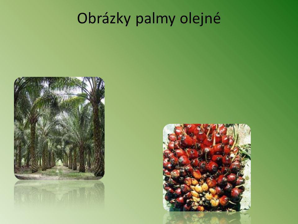 Obrázky palmy olejné