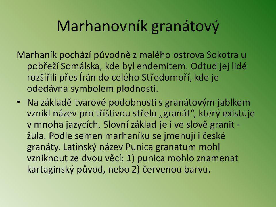 Marhanovník granátový Marhaník pochází původně z malého ostrova Sokotra u pobřeží Somálska, kde byl endemitem. Odtud jej lidé rozšířili přes Írán do c