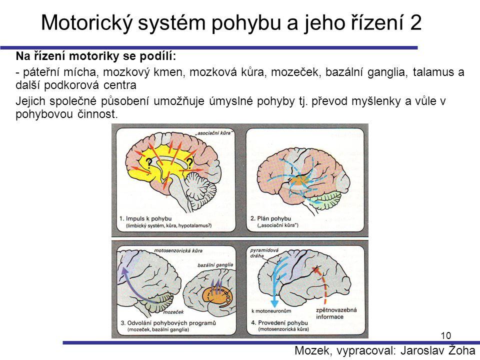 10 Motorický systém pohybu a jeho řízení 2 Na řízení motoriky se podílí: - páteřní mícha, mozkový kmen, mozková kůra, mozeček, bazální ganglia, talamu