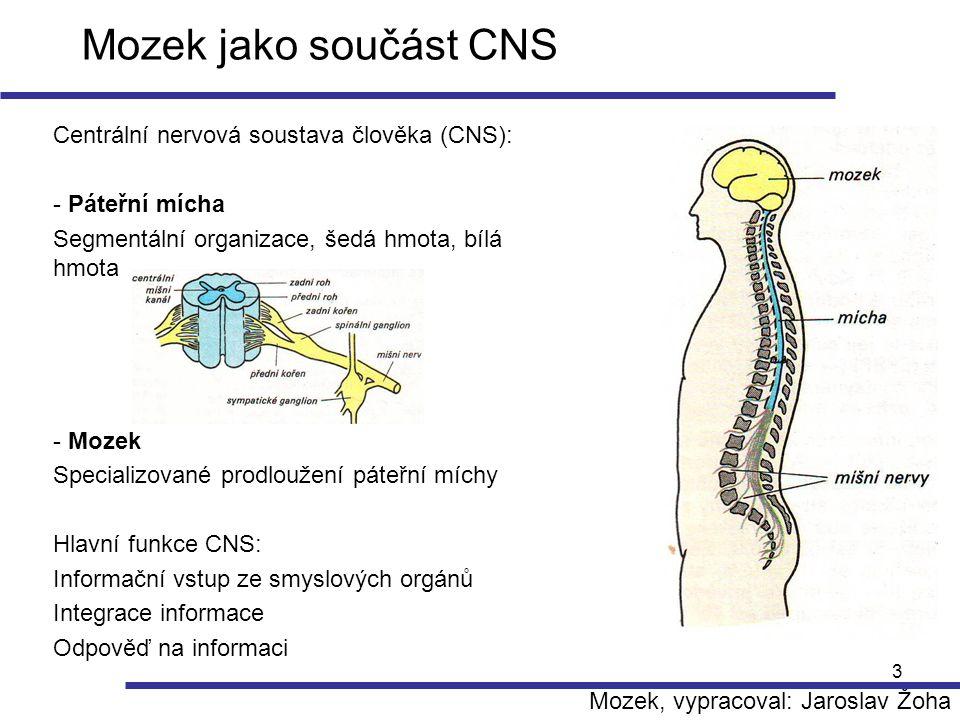 3 Mozek jako součást CNS Centrální nervová soustava člověka (CNS): - Páteřní mícha Segmentální organizace, šedá hmota, bílá hmota - Mozek Specializova