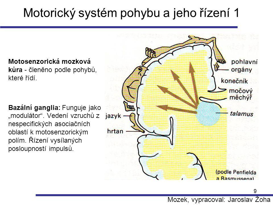 10 Motorický systém pohybu a jeho řízení 2 Na řízení motoriky se podílí: - páteřní mícha, mozkový kmen, mozková kůra, mozeček, bazální ganglia, talamus a další podkorová centra Jejich společné působení umožňuje úmyslné pohyby tj.