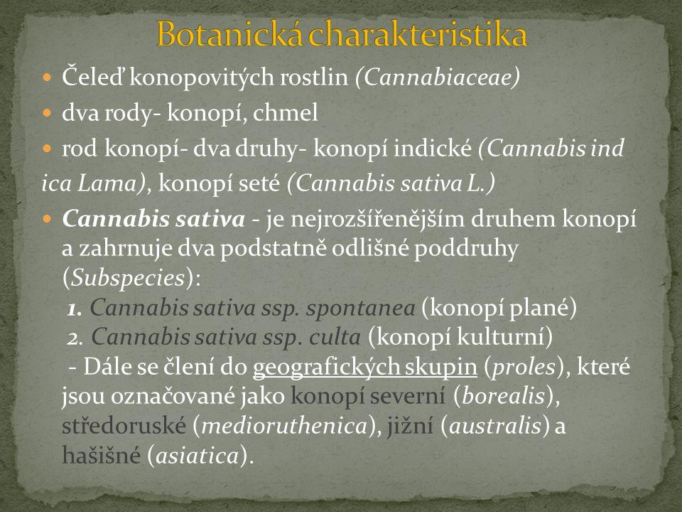 Čeleď konopovitých rostlin (Cannabiaceae) dva rody- konopí, chmel rod konopí- dva druhy- konopí indické (Cannabis ind ica Lama), konopí seté (Cannabis sativa L.) Cannabis sativa - je nejrozšířenějším druhem konopí a zahrnuje dva podstatně odlišné poddruhy (Subspecies): 1.