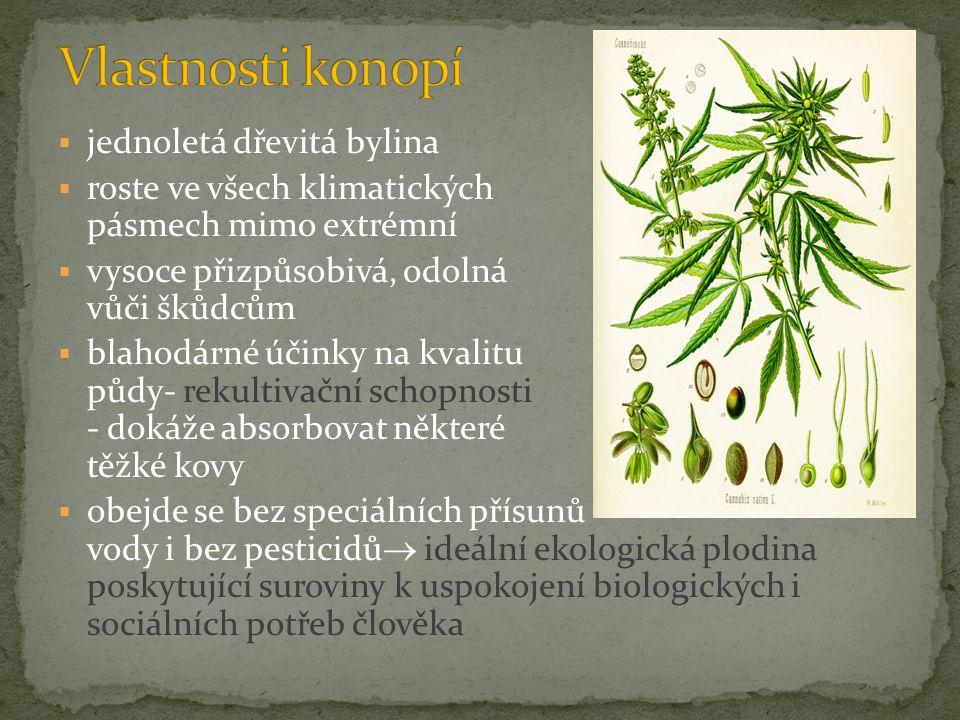  jednoletá dřevitá bylina  roste ve všech klimatických pásmech mimo extrémní  vysoce přizpůsobivá, odolná vůči škůdcům  blahodárné účinky na kvali