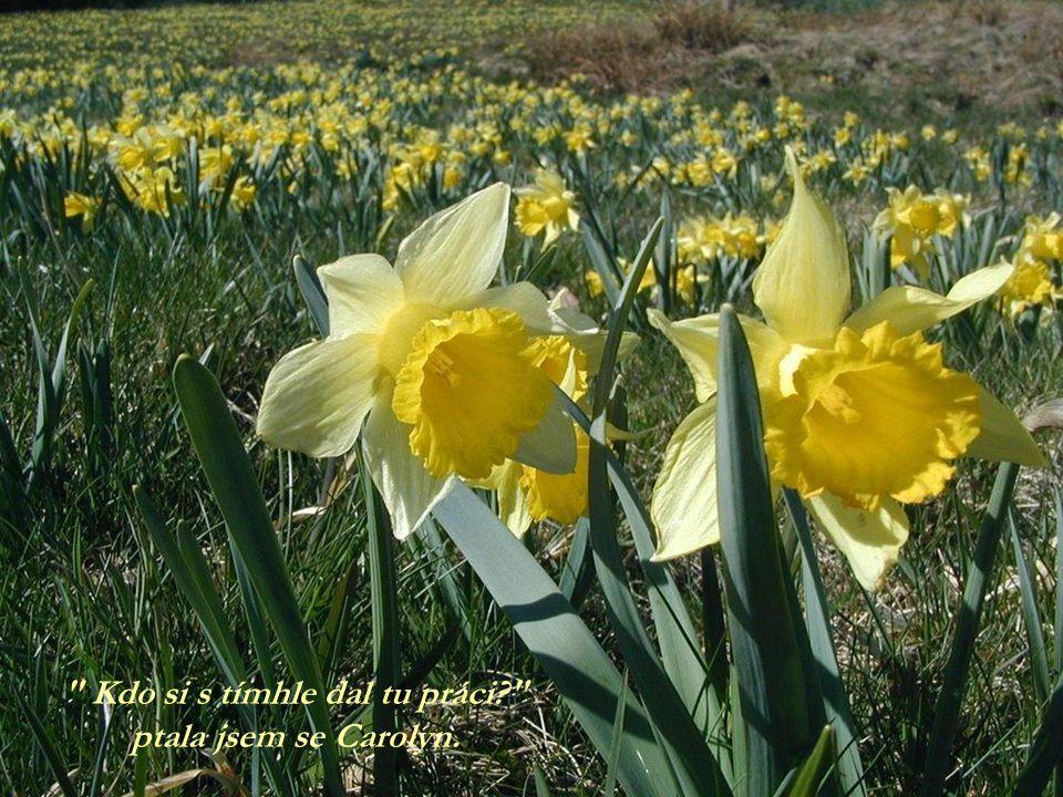 Květiny byly vysázeny ve velkolepých, vířivých vzorech, tmavě oranžové, bílé a mnoho odstínů žluté. Každá barevná odrůda byla vysázena ve skupině a vy