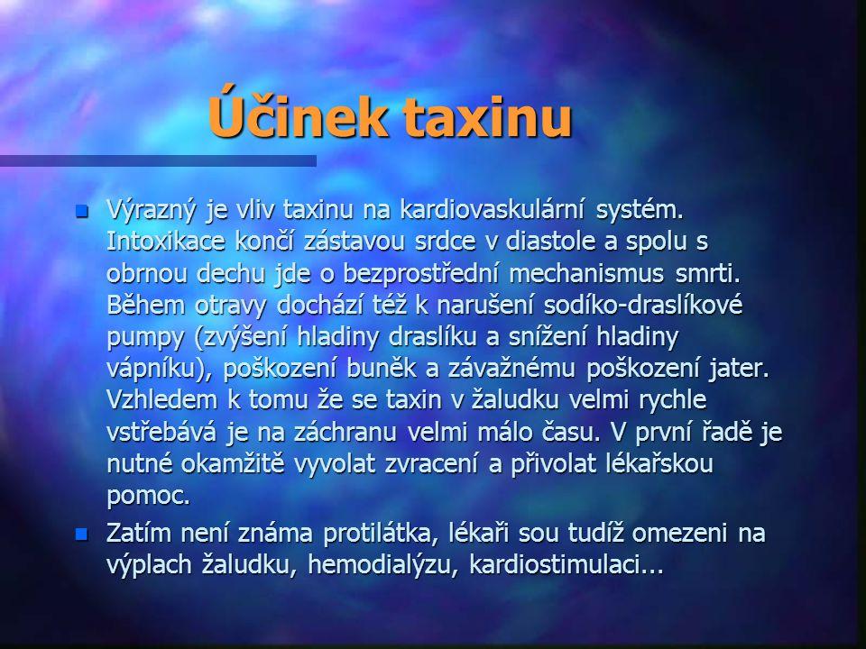 Účinek taxinu n Výrazný je vliv taxinu na kardiovaskulární systém. Intoxikace končí zástavou srdce v diastole a spolu s obrnou dechu jde o bezprostřed