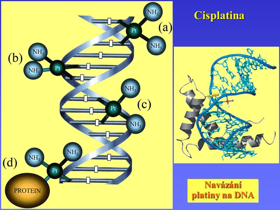 Cisplatina Navázání platiny na DNA