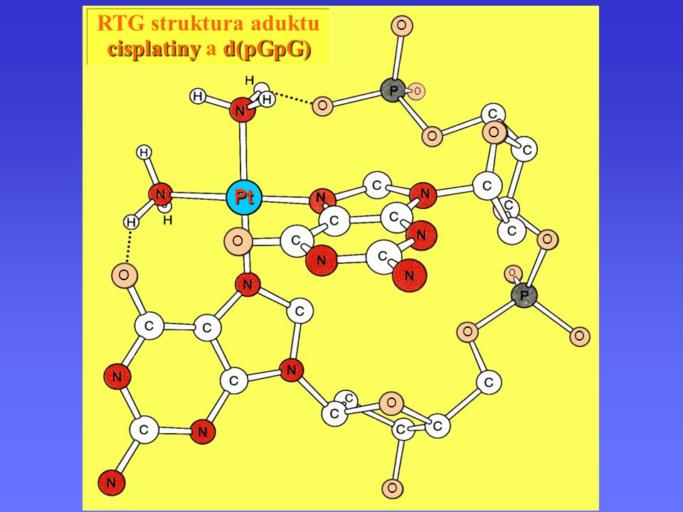 Komplexy platiny Pt O O O O O O O O O O O O O RTG struktura aduktu cisplatiny d(pGpG) cisplatiny a d(pGpG)