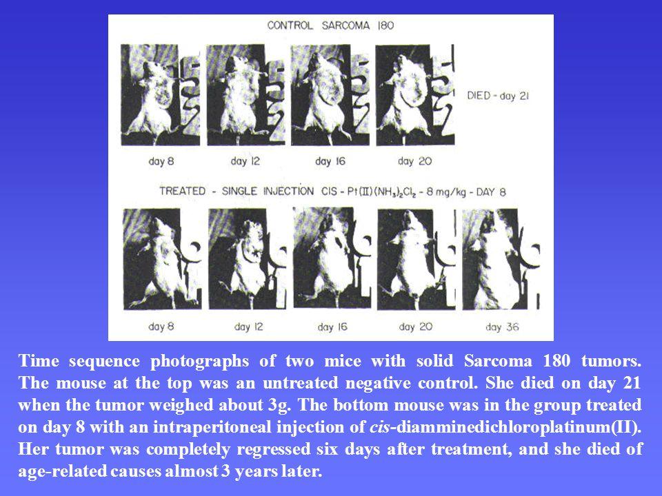Principy NMR a MR NMR NMR – variabilita frekvence – posice píků