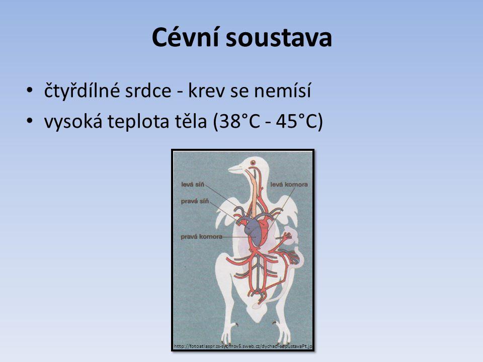 Cévní soustava čtyřdílné srdce - krev se nemísí vysoká teplota těla (38°C - 45°C) http://fotoatlaspr.zs-sychrov5.sweb.cz/dychaci-sopustavaPt.jpg