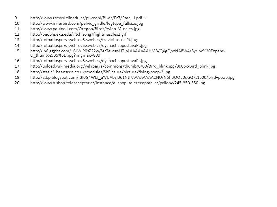 9.http://www.zsmysl.zlinedu.cz/puvodni/Biker/Pr7/Ptaci_I.pdf - 10.http://www.innerbird.com/pelvic_girdle/legtype_fullsize.jpg 11.http://www.paulnoll.c