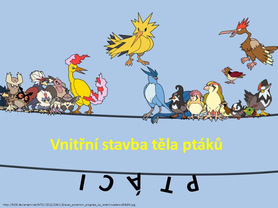 P T Á C I Vnitřní stavba těla ptáků http://fc09.deviantart.net/fs70/i/2012/204/1/8/aves_pokemon_progress_by_skaticinvaders-d58c9it.jpg