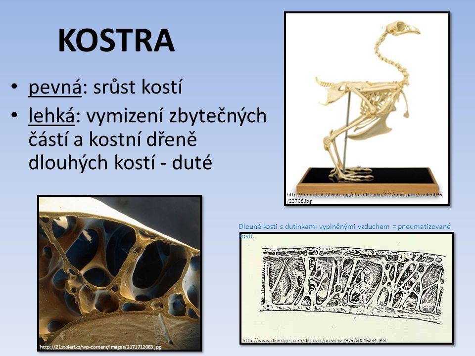 http://vyuka.zsjarose.cz/data/swic/lessons/1904.jpg