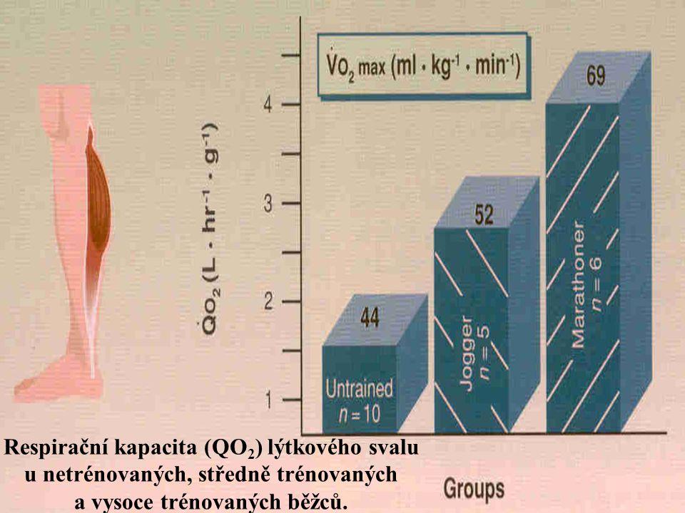 Respirační kapacita (QO 2 ) lýtkového svalu u netrénovaných, středně trénovaných a vysoce trénovaných běžců.