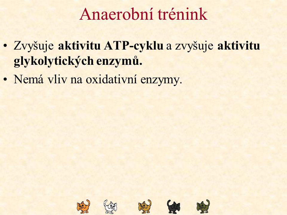 Anaerobní trénink Zvyšuje aktivitu ATP-cyklu a zvyšuje aktivitu glykolytických enzymů. Nemá vliv na oxidativní enzymy.