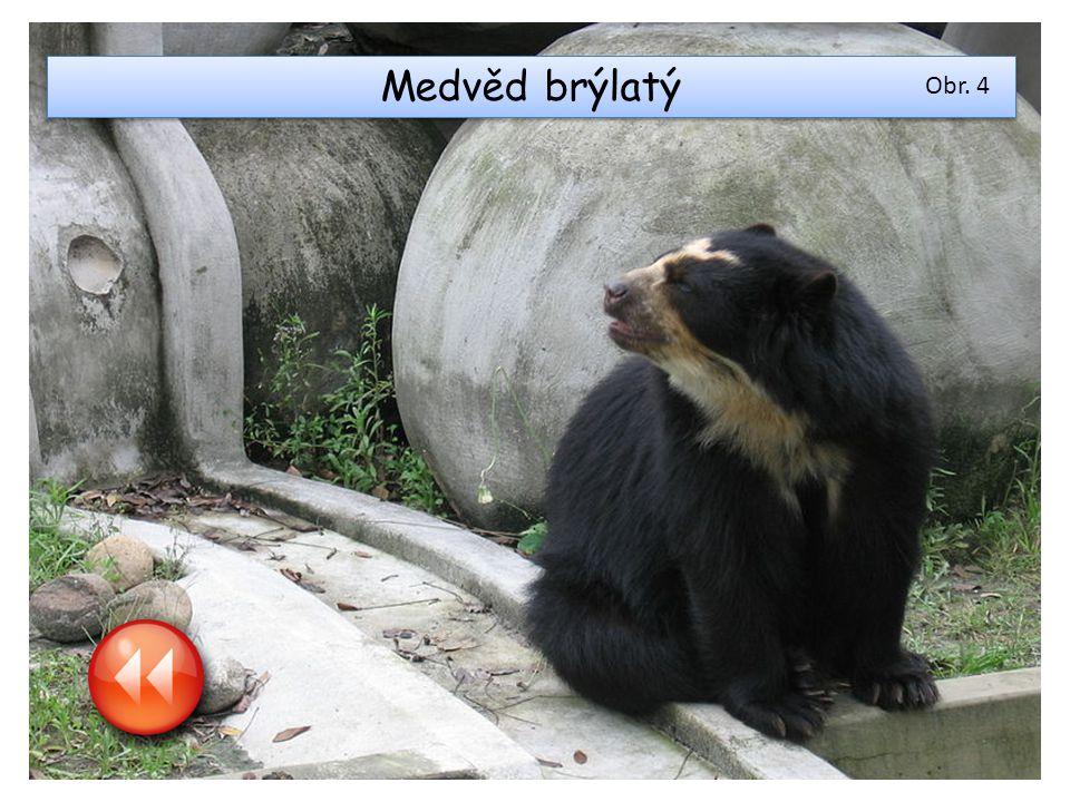 Medvěd brýlatý Obr. 4