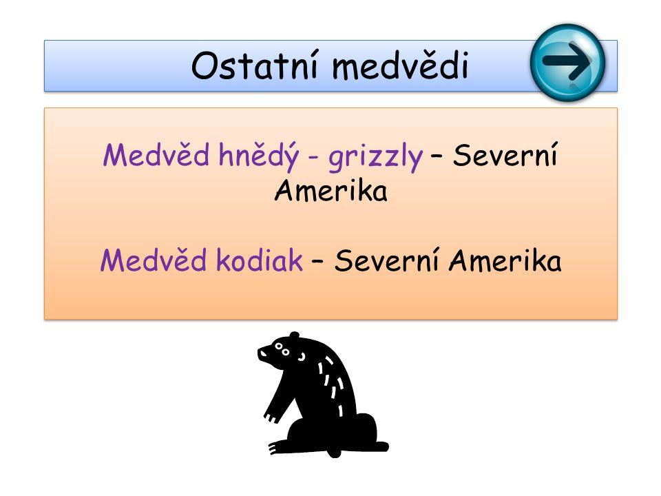 Medvěd hnědý - grizzly – Severní Amerika Medvěd kodiak – Severní Amerika Medvěd hnědý - grizzly – Severní Amerika Medvěd kodiak – Severní Amerika Ostatní medvědi