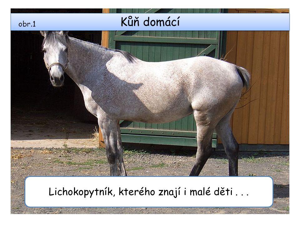 Kůň domácí Lichokopytník, kterého znají i malé děti... obr.1