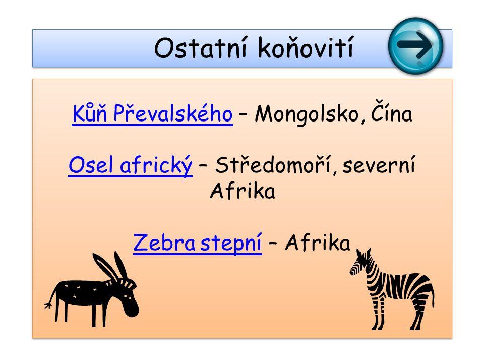 Kůň PřevalskéhoKůň Převalského – Mongolsko, Čína Osel africkýOsel africký – Středomoří, severní Afrika Zebra stepníZebra stepní – Afrika Kůň Převalské