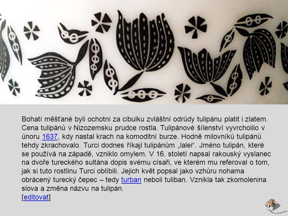 Bohatí měšťané byli ochotni za cibulku zvláštní odrůdy tulipánu platit i zlatem.