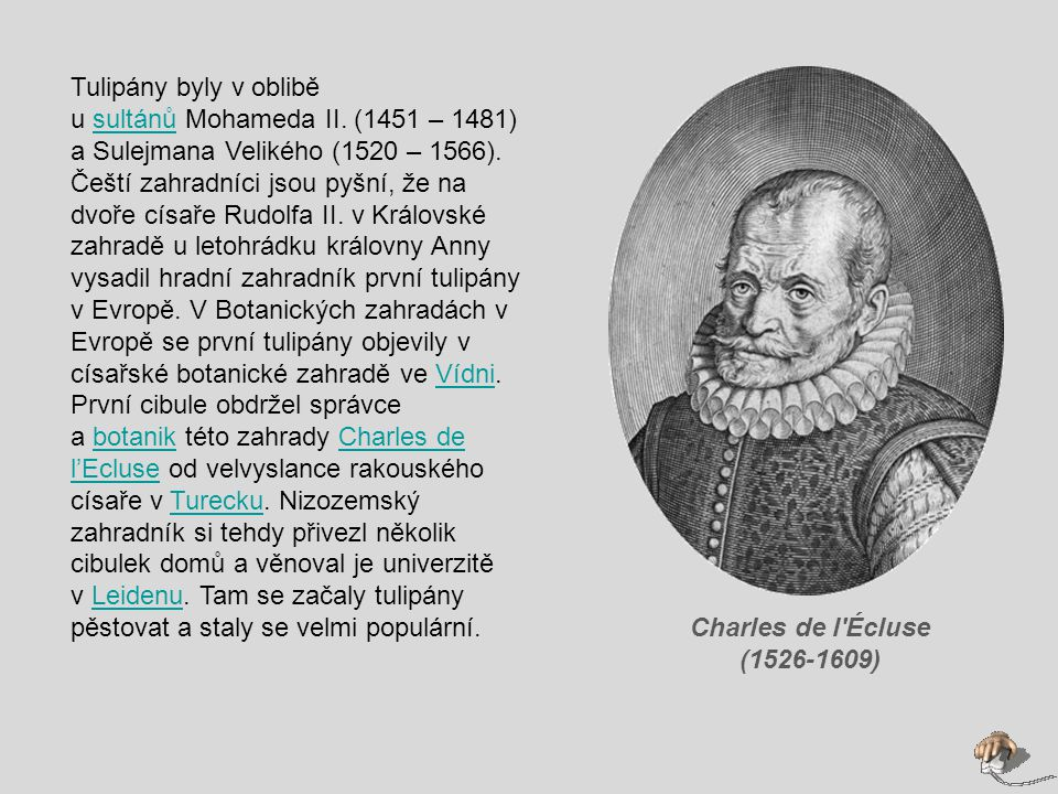 Charles de l Écluse (1526-1609) Tulipány byly v oblibě u sultánů Mohameda II.